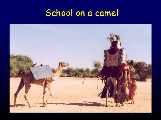schoolCamel