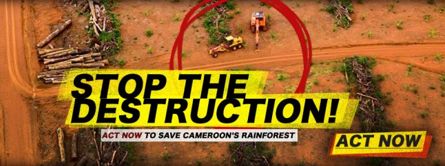 Cameroon-Action-BOS